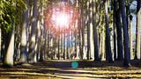 Walking into the Sun - 182903551