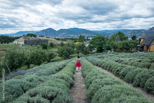 Foto op Aluminium Blauwe jeans Girl on a red skirt in a lavender farm
