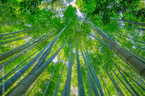 Fotobehang Bamboe Grove of the bamboo garden of the Take-dera Temple or Hokoku-ji Temple of Kamakura town of Japan. Meditative and Buddhism concept. Prospective view.