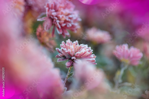 Aluminium Galyna A. Frozen flowers