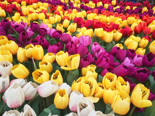 Aluminium Tulpen Many fake flowers Tulip plastic colorful