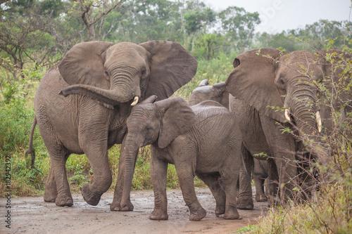 Deurstickers Cappuccino Elefant