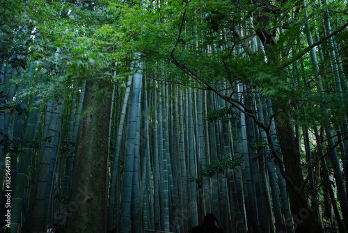 Plexiglas Bamboe A bamboo park in Hokokuji Temple in Kamakura city, Japan
