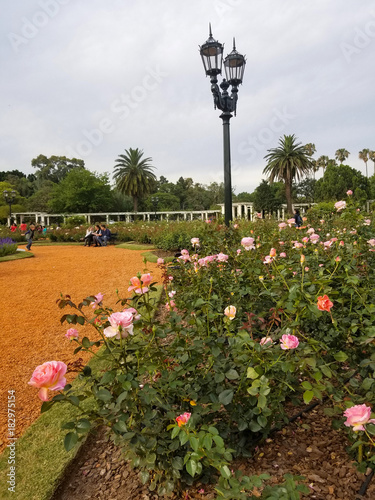Papiers peints Buenos Aires Rose Park with over a thousand roses in Buenos Aires Argentina