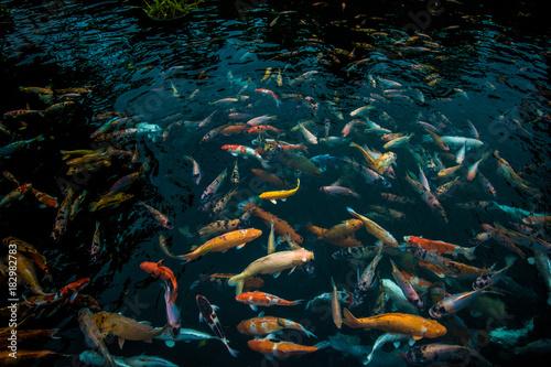 Plexiglas Bali Fish