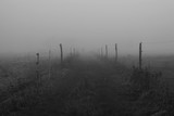 paddock in the fog - 182984922
