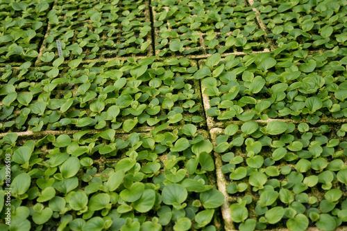 Plants in plant nurseries