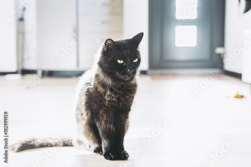 Fotobehang Panter Chat noir majestueux
