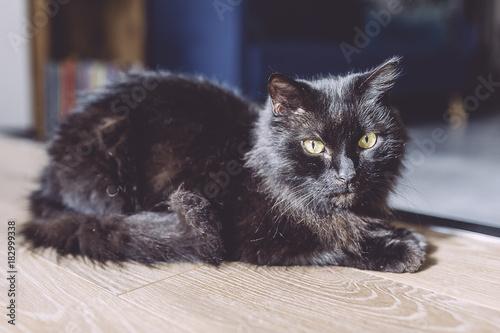 In de dag Panter Chat noir aux yeux jaunes