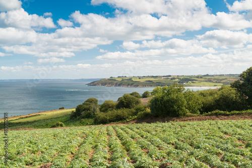 Fotobehang Pistache Küste mit Artischocken Feld bei Plestin les Greves, Bretagne, Frankreich