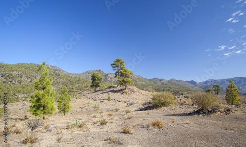 Staande foto Canarische Eilanden Gran Canaria, November