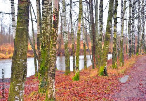 Foto op Canvas Herfst Park at autumn.