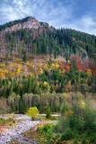Colorful autumn trees in Tatra mountains, Poland