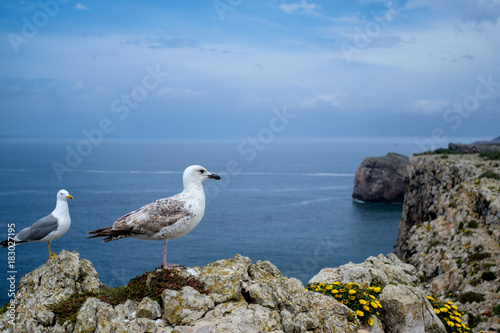 Seagull resting on a cliff. Ocean view. Poster