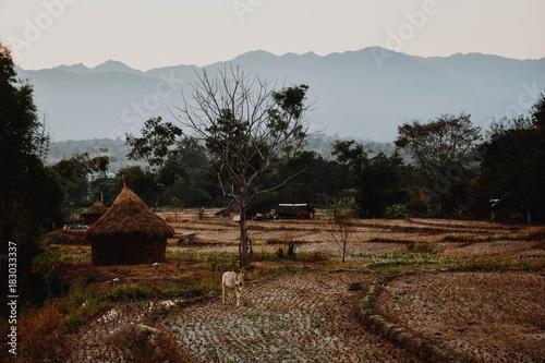 Deurstickers Bleke violet Pai rice fields
