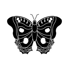 butterfly insect bug icon image vector illustration design  black and