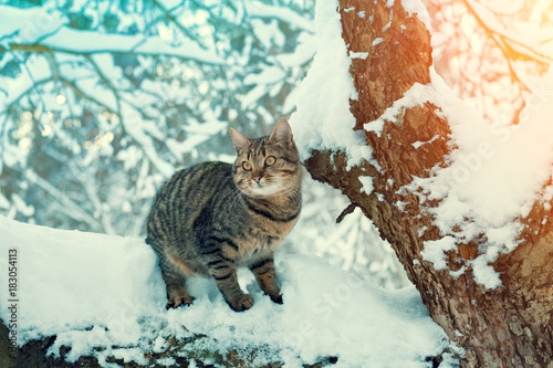 Fotobehang Kat Portrait of a cat siting on the snowy tree in the forest