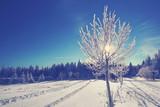 reifbedeckter Baum im Winter - 183058534