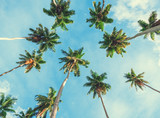 Coconut palm tree on sky background.   Low Angle View. Toned image - 183061153