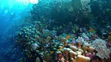 Underwater landscape with coral and anthias fishes - 183066123