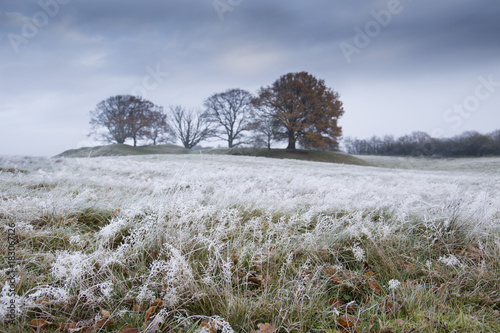 winter landscape with frozen grass with trees in the background and a dark autumn sky