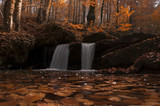 Autumn Forest and Small Waterfalls