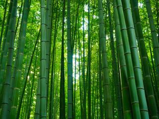 Bambus Hintergrund Wald grün © prempict