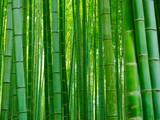 Fototapeta Sypialnia - Bambus Hintergrund Wald © prempict
