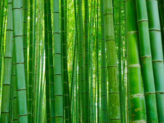 Bambus Hintergrund Wald