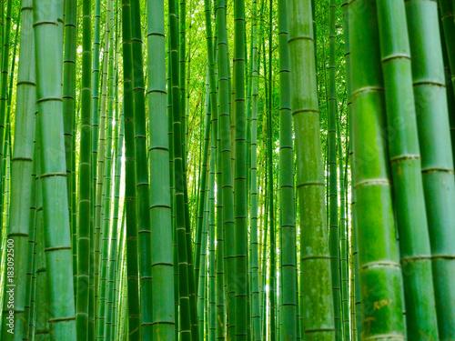 Bambus Hintergrund Wald - 183092500