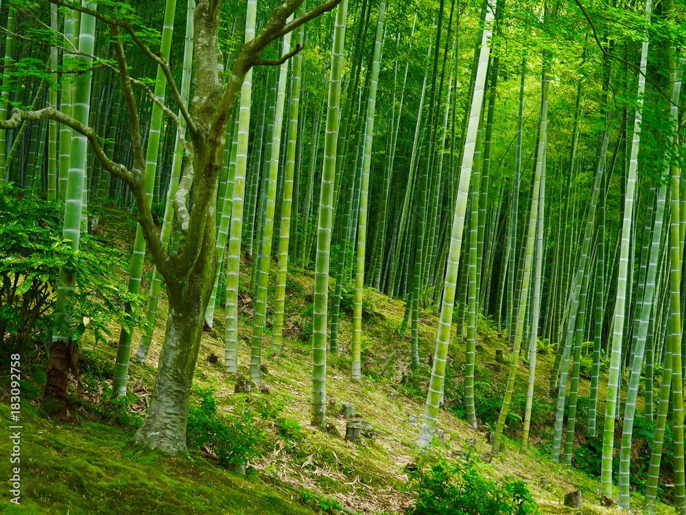 fotobehang bambus hintergrund wald gr n foto4art. Black Bedroom Furniture Sets. Home Design Ideas
