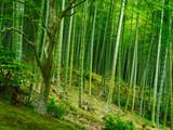Bambus Hintergrund Wald grün