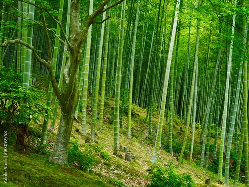 Fotobehang Bamboe Bambus Hintergrund Wald grün
