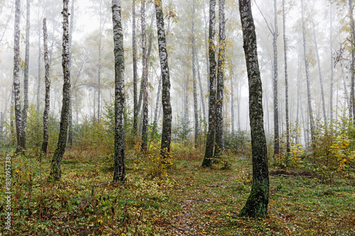 Misty morning in the woods in the fall. Morning, autumn.