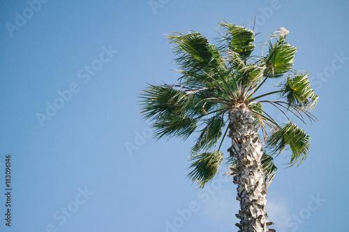 Palme | USA, Oceanside