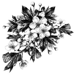 Apple flowers sketch vector graphics monochrome black-and-white drawing