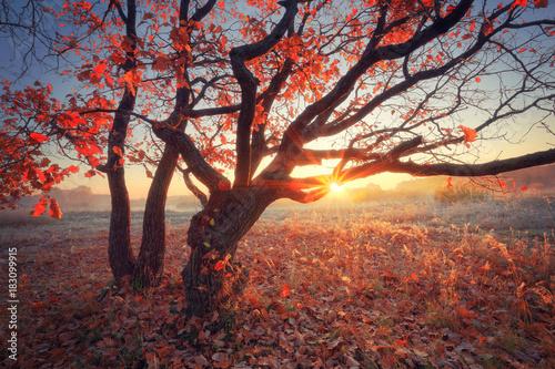 Foto op Canvas Herfst Autumn sunny scene