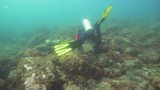Scuba diver explores underwater coral reef and watching the fish.Scuba diver underwater in a tropical sea.Tropical fish on a coral reef. Diving and snorkeling in the tropical sea. 4K video. - 183108192