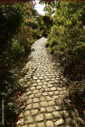 In de dag Weg in bos Chemin aux pavés traversant le végétation luxuriante au Vrijbroekpark à Malines