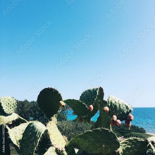 Foto op Canvas Natuur prickly pears