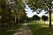 Chemin ombragé longeant un bois très dense et le chenal principal sous le soleil au Vrijbroekpark, à Malines