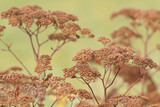 dry autumn plant with seeds - 183114554
