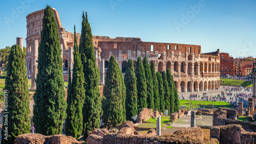 Foto op Canvas Rome Cypress alley going to Colosseum in Rome, Italy