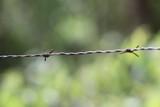 Wire - 183135791