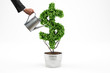 Potted plant with dollar shape. 3D Rendering - 183140110