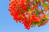 bouquet flamboyant rouge - 183143716