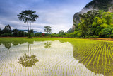 Landscape of rice field in the countryside of Thailand.