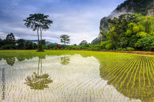 Plexiglas Thailand Landscape of rice field in the countryside of Thailand.