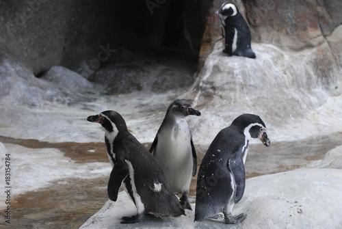 Plexiglas Pinguin penguins in the cave