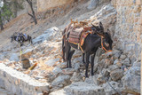 famous donkeys from Lindos, Rhodes Island, Greece - 183170990